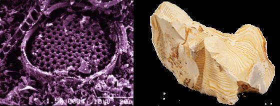 メソポア孔の拡大写真と珪藻土の原石